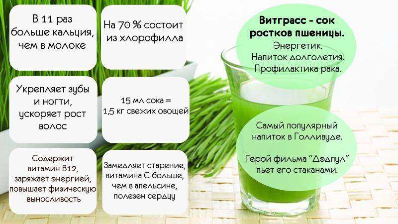 Инфографика по Витграссу картинка