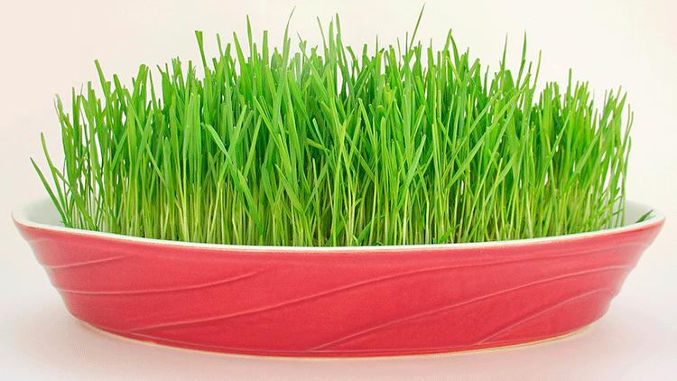 Полеза пророщенных семян