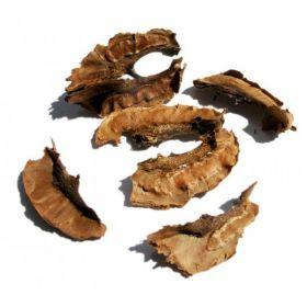 Перегородки грецких орехов фото